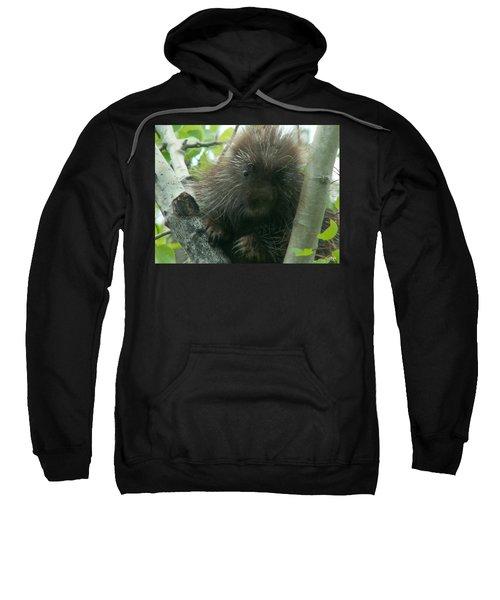 Porcupine Tree Sweatshirt