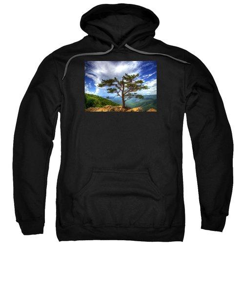 Ravens Roost Tree Sweatshirt
