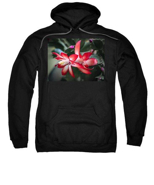 Red Christmas Cactus Sweatshirt