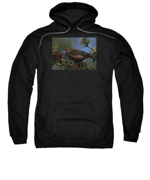 Red Crossbill Feeds On Pine Cone Seeds Sweatshirt by Mark Wallner