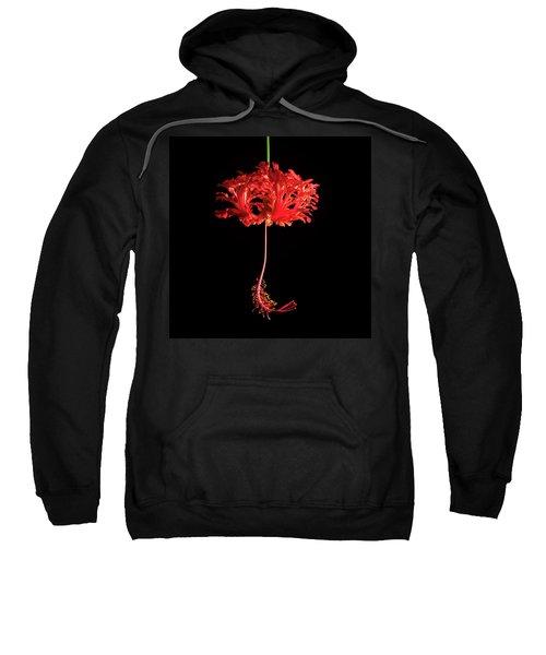 Red Hibiscus Schizopetalus On Black Sweatshirt