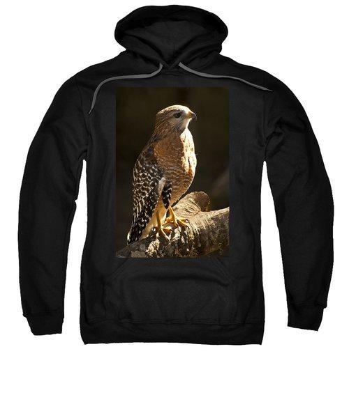 Red-shouldered Hawk Sweatshirt