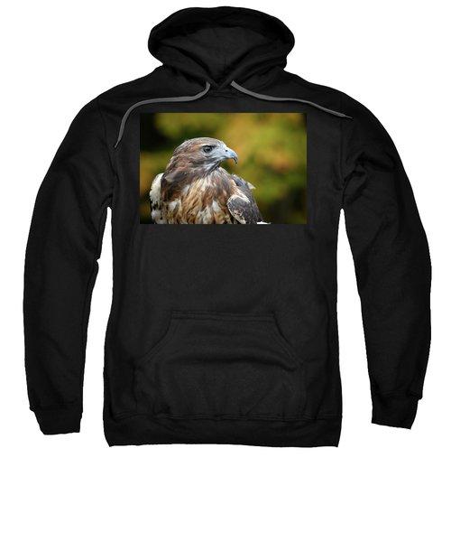 Red Tail Hawk Sweatshirt