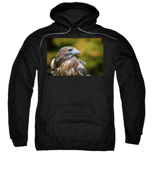Red Tail Hawk Sweatshirt