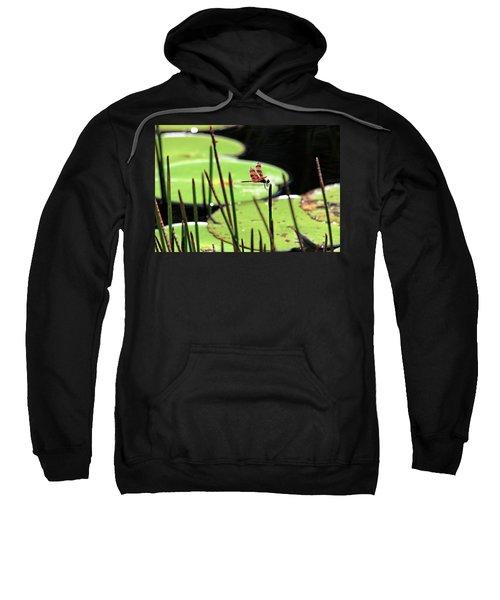 Resting Dragonfly Sweatshirt