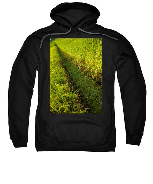 Rice Field Hiking Sweatshirt