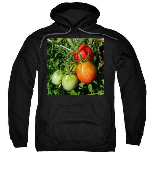 ripening #photography #garden Sweatshirt