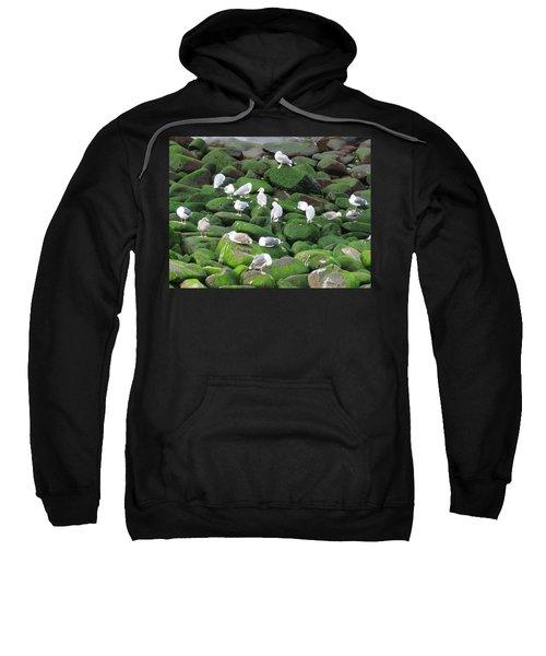Rocks And Gulls Sweatshirt