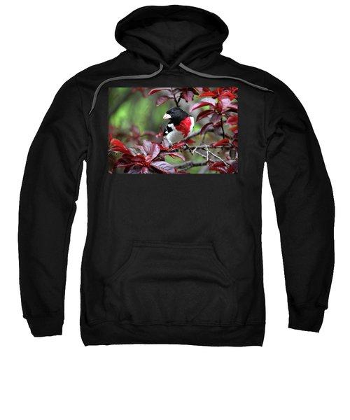 Rose-breasted Grosbeak Sweatshirt