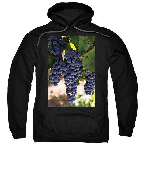 Sauvignon Grapes Sweatshirt