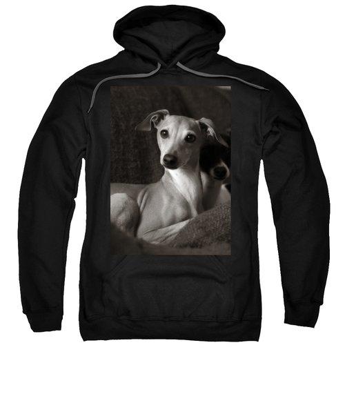 Say What Italian Greyhound Sweatshirt