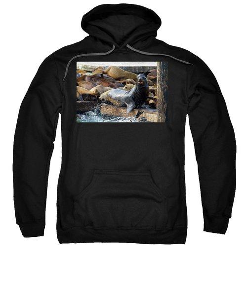 Sea Lions On The Floating Dock In San Francisco Sweatshirt