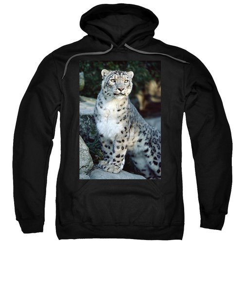 Snow Leopard Uncia Uncia Portrait Sweatshirt