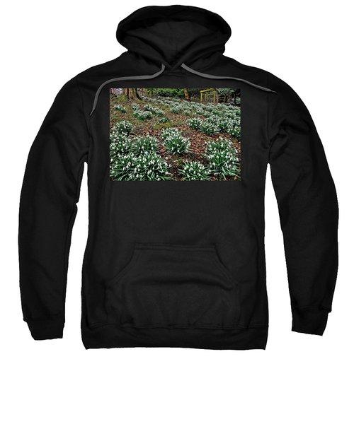 Snowdrops In Spring Woodland Sweatshirt