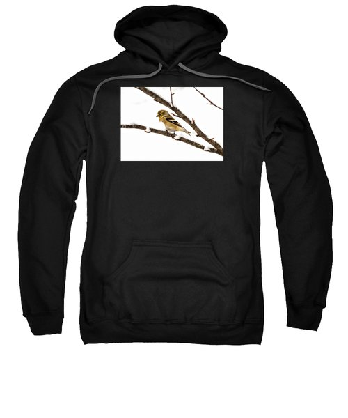 Snowy Day Goldfinch Sweatshirt