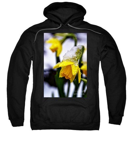 Spring Daffodil Flowers In Snow Sweatshirt