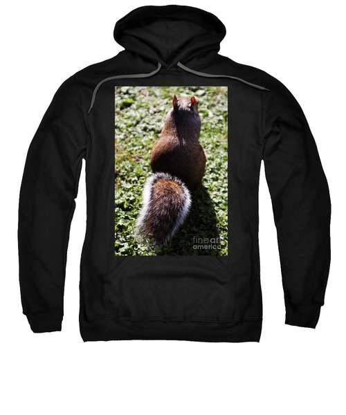 Squirrel S Back Sweatshirt
