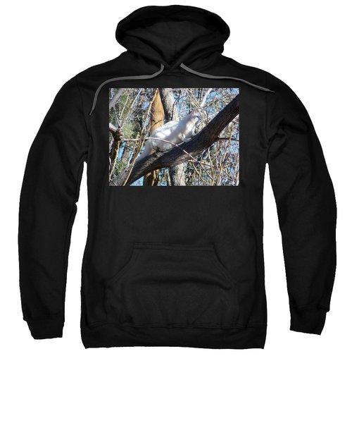Stalking Ghost Sweatshirt