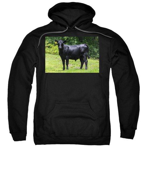 Staring Steer Sweatshirt