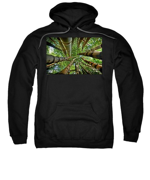 Stunning Bamboo Forest - Color Sweatshirt