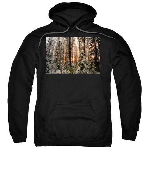 Sun Of Winter Trees Sweatshirt