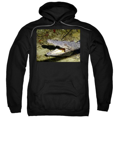 Sweatshirt featuring the photograph Sunbathing Croc by Francesca Mackenney