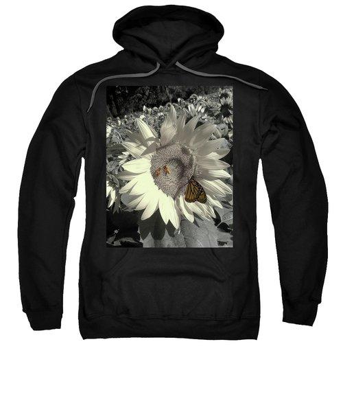 Sunflower Tint Sweatshirt