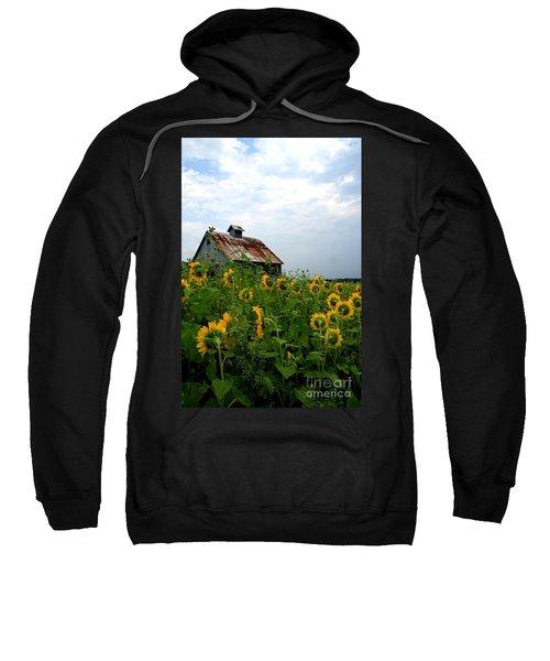 Sunflowers Rt 6 Sweatshirt