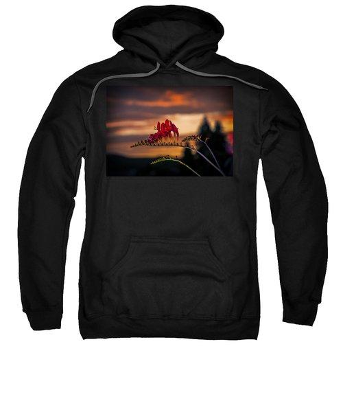 Sunset Crocosmia Sweatshirt