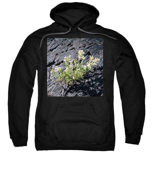 T-107709 Hot Rock Penstemon Sweatshirt