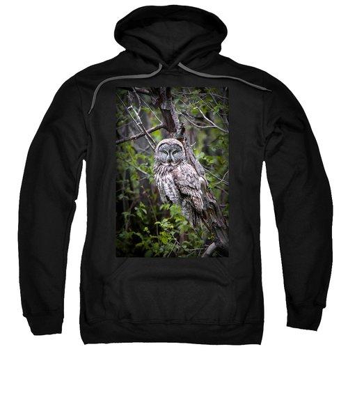 The Great Gray Sweatshirt