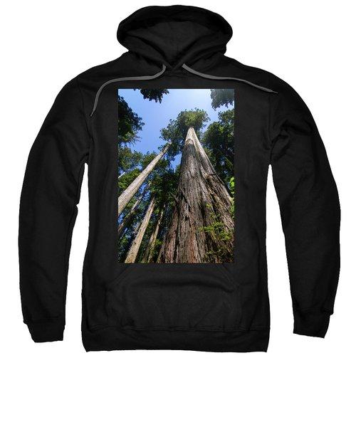 Towering Redwoods Sweatshirt