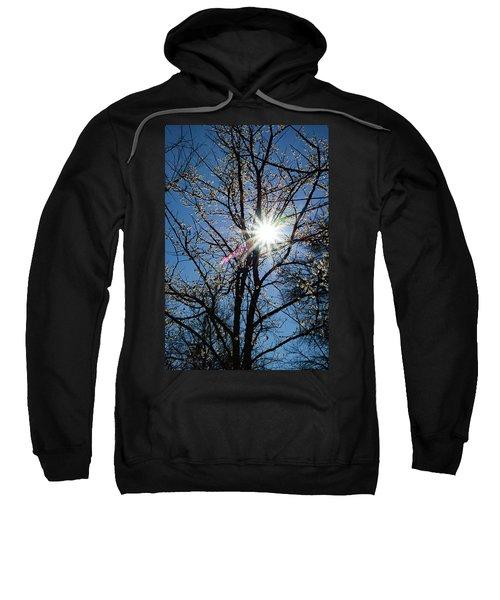 Tree Buds Sweatshirt