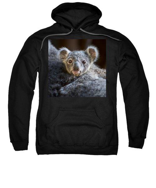 Up Close Koala Joey Sweatshirt by Jamie Pham