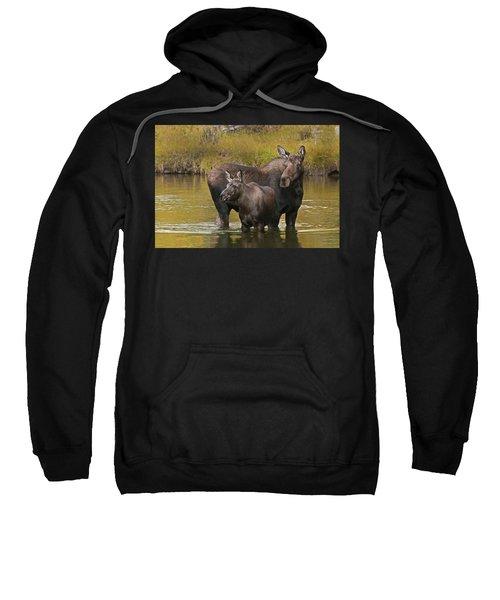 Watchful Moose Sweatshirt