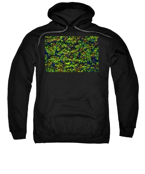 Water Plants Sweatshirt