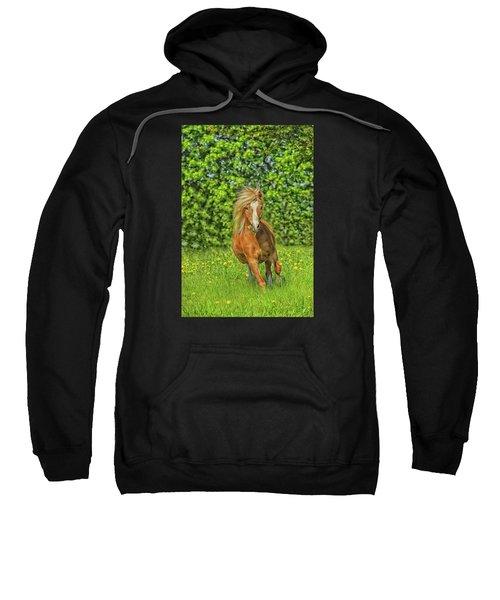 Welsh Pony Sweatshirt