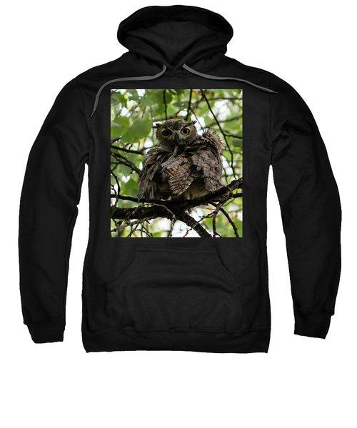 Wet Owl Sweatshirt