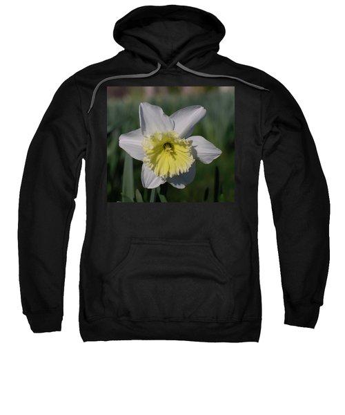 White And Yellow Daffodil Sweatshirt