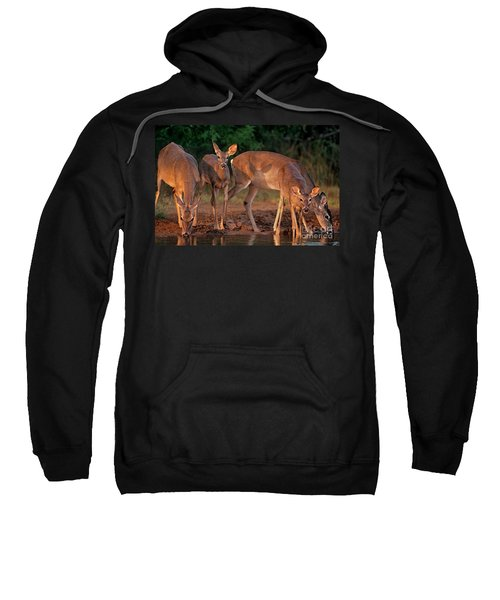 Whitetail Deer At Waterhole Texas Sweatshirt
