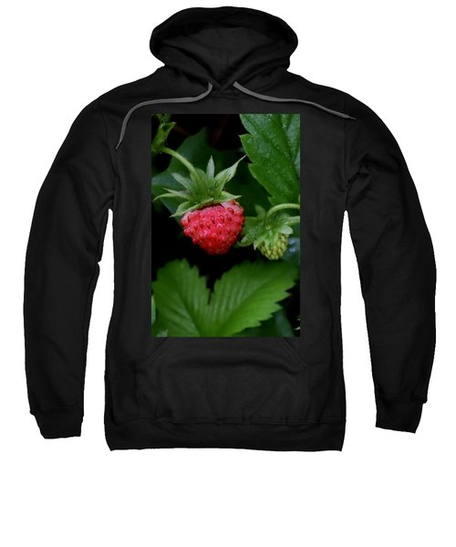 Wild Strawberry Sweatshirt
