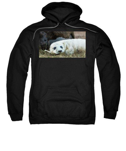 Young Pup Sweatshirt