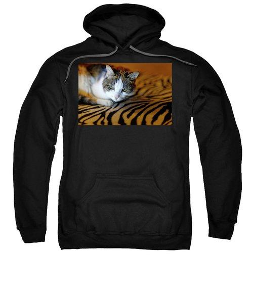 Zebra Cat Sweatshirt