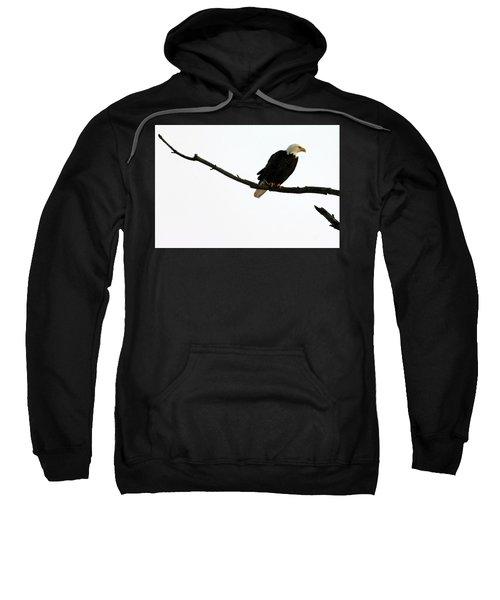 Bald Eagle 120501 Sweatshirt