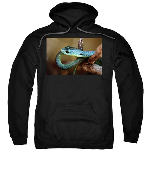 Boomslang Sweatshirt