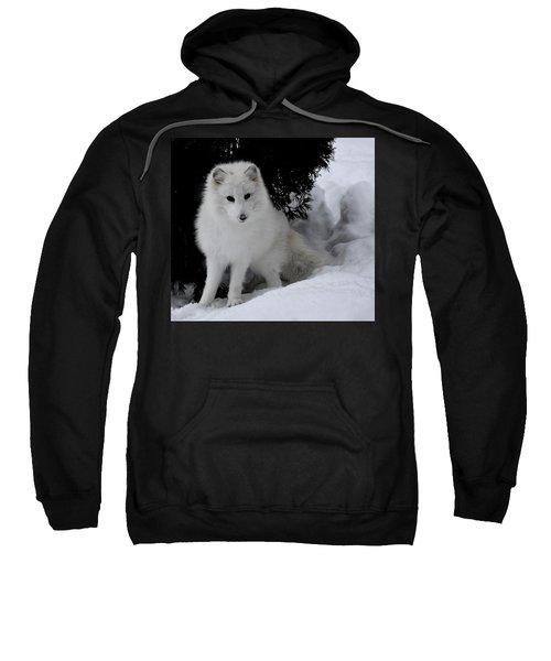 Artic Fox Sweatshirt