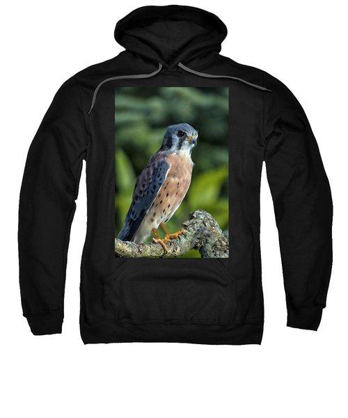 American Kestrel 9251501 Sweatshirt