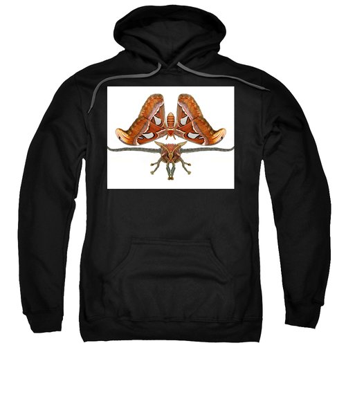 Atlas Moth7 Sweatshirt