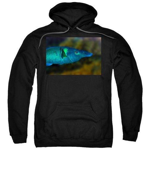 Bird Wrasse Sweatshirt