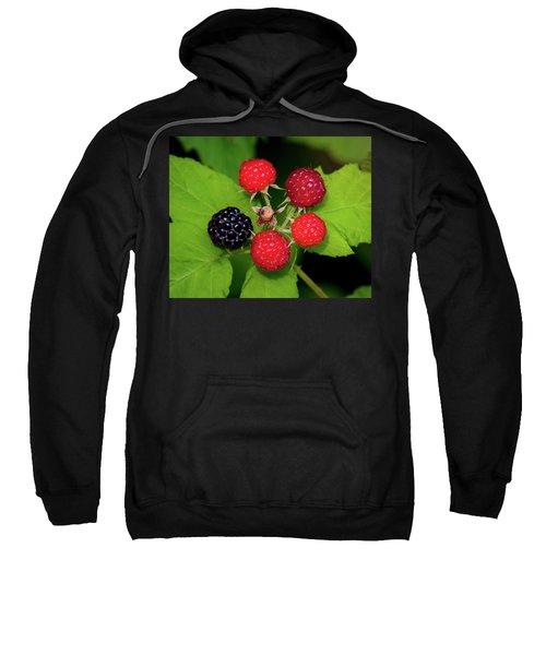 Blackberries Sweatshirt